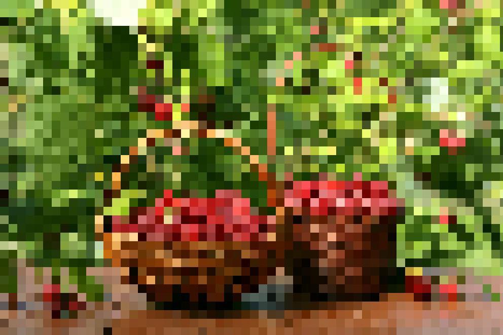Raspberries #2